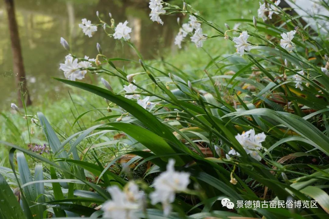 阳春三月古窑里,许你一抹春色